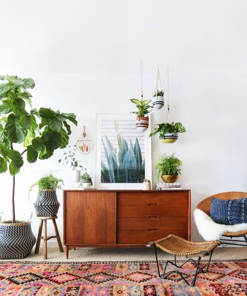 Be careful: humidity from plants can damage rugs